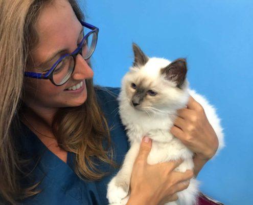 Ambulatorio veterinario Fiocco Scalvi gatto sterilizzazione