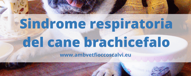 Sindrome respiratoriadel cane brachicefalo