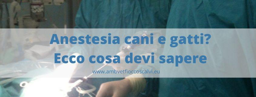 anestesia cani e gatti