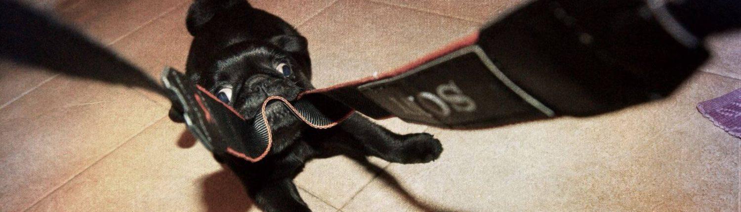 sindrome del cane brachicefalo trattamenti