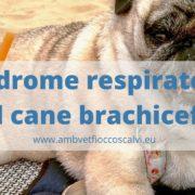 sindrome respiratoria cane
