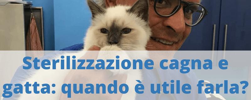 sterilizzazione cagna e gatta