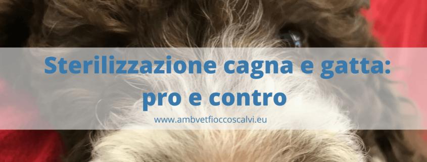 sterilizzazione cagna e gatta (1)