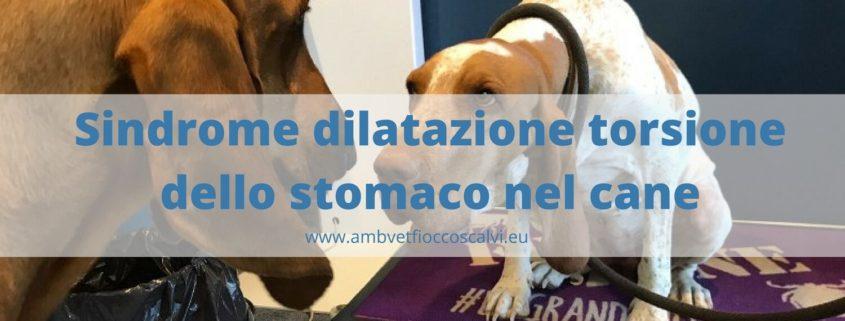 torsione dello stomaco nel cane (1)