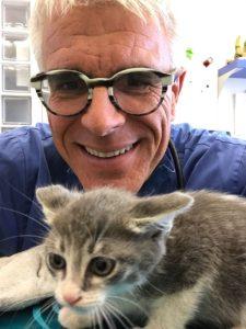 vaccinazione core nei gatti ambulatorio fiocco scalvi titolazione