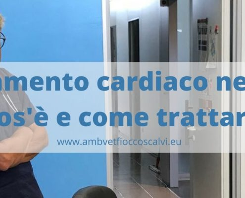 versamento cardiaco cane