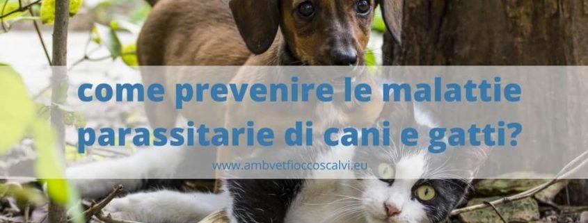 parassiti cani e gatti