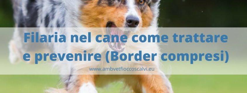 filaria cane gatto e furetto fb (1)