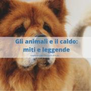Animali e il caldo:come proteggere cani, gatti e conigli.