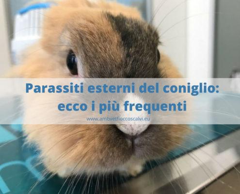 parassiti esterni dei conigli