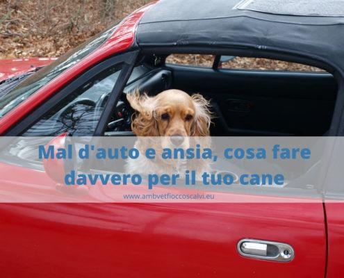 mal d'auto e cinetosi nel cane