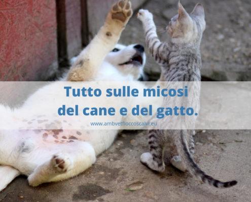 micosi cane e gatto