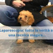 Perché scegliere la laparoscopia per sterilizzare il cane?