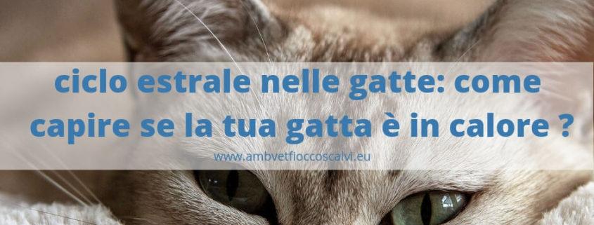 Gatti E Ciclo Estrale Quali I Sintomi Nel Maschio E Femmina Vet