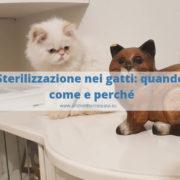 sterilizzazione nei gatti