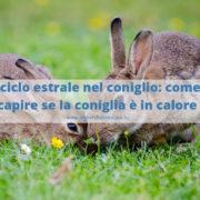 Calore nel coniglio nano:cosa fare per evitare problemi?