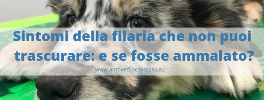 sintomi della filaria nel cane