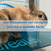 sterilizzare coniglio