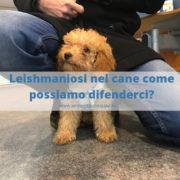 Leishmaniosi nel cane: come difendersi e riconoscerla?