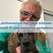 Sintomi di Leishmaniosi nel cane: gli stadi della malattia