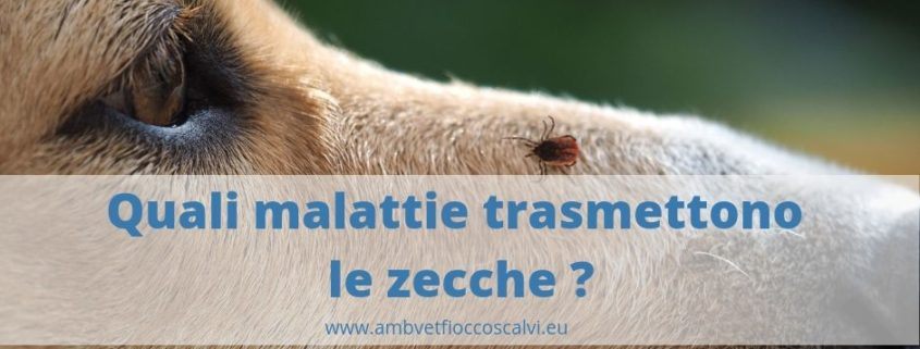 malattie trasmesse dalle zecche