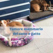 tumore alle mammelle cane e gatto