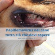 papillomavirus nel cane