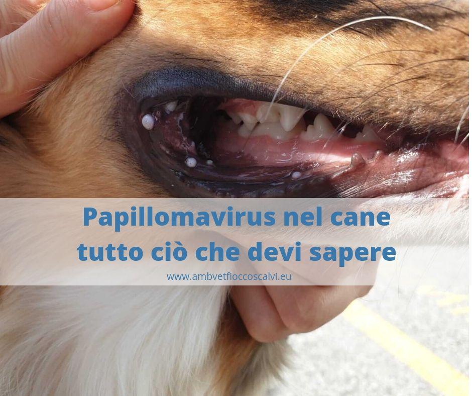 papilloma naso cane