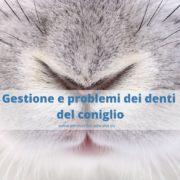 3 cose da sapere sui denti del tuo coniglio nano