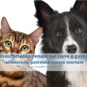Insufficienza renale nel cane e gatto: di cosa si tratta?