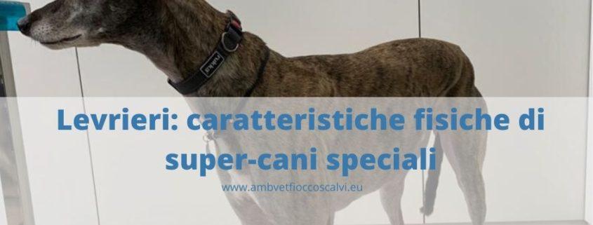 Levrieri cani speciali