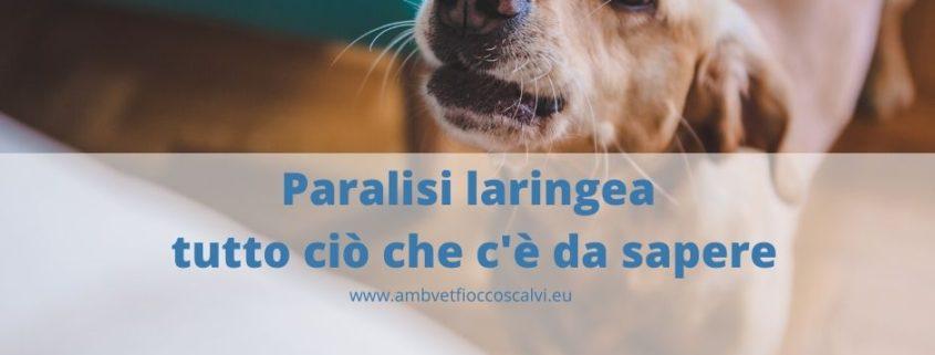 Paralisi laringea cane