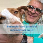 Podenco: caratteristiche di un cane primitivo