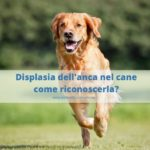Displasia dell'anca nel cane: cause e come riconoscerla