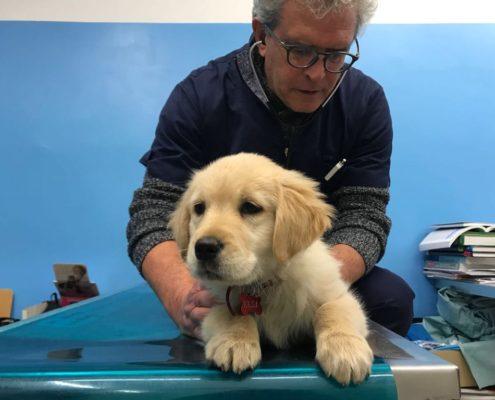 Cucciolo in visita dolore articolare nel cane