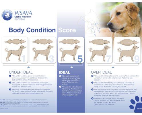 Body-Condition-Score cane