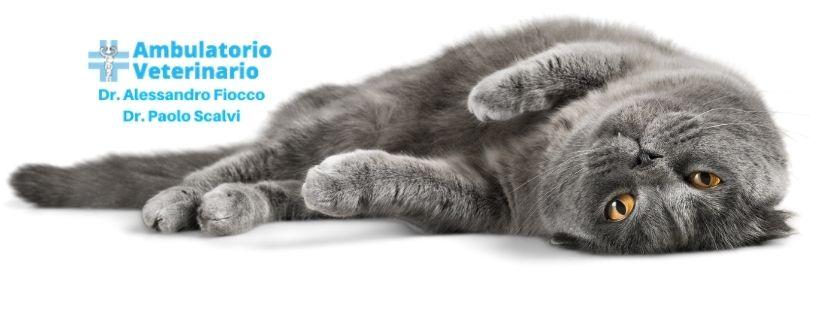 Ipertensione gatto cause