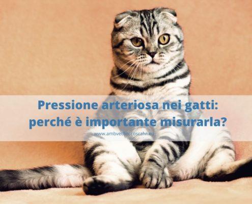 Pressione arteriosa nei gatti