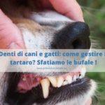 Tartaro: rischi per la salute di cani e gatti