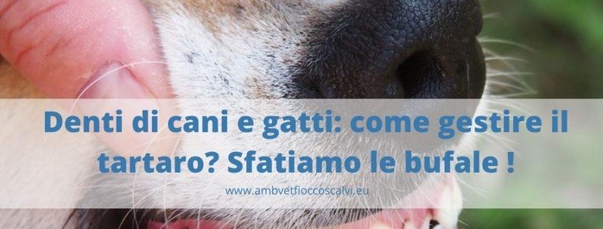 denti-cani-e-gatti-come-gestire-il-tartaro