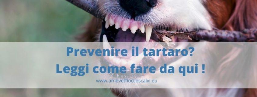 prevenzione del tartaro nel cane e gatto