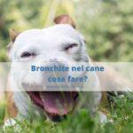 Bronchite nel cane: quando eseguire una endoscopia?