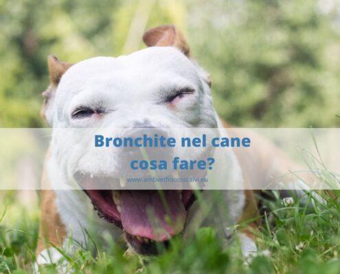 Bronchite nel cane