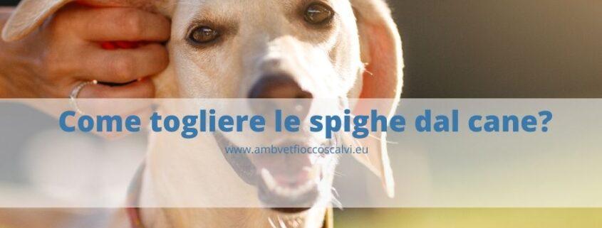 come togliere le spighe dal cane