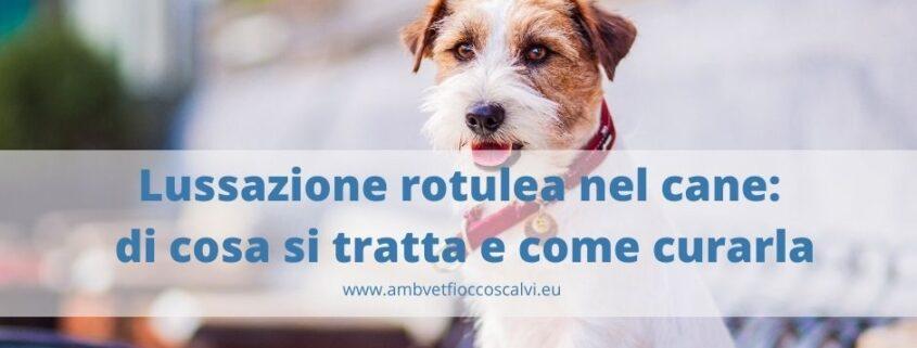lussazione rotulea cane
