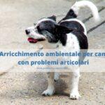 Dolore articolare nel cane anziano: come gestirli?