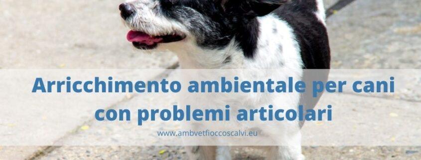 Arricchimento ambientale per cani con problemi articolari