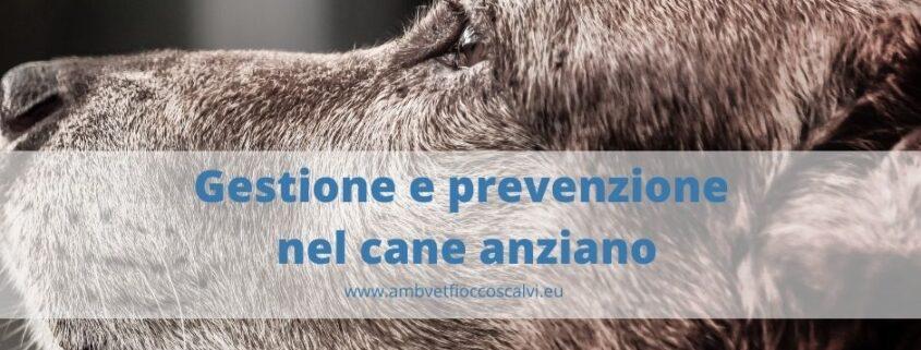 Gestione e prevenzione nel cane anziano